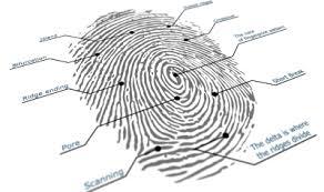 fingerprint image fingerprint template
